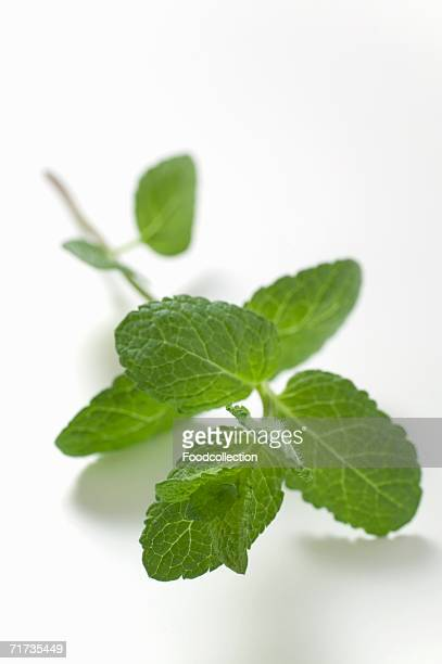 A sprig of mint
