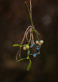 Sprig of mistletoe with star