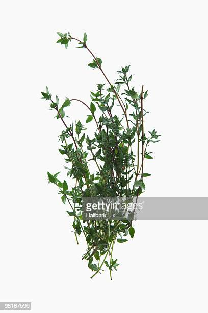 A sprig of organic thyme on a lightbox