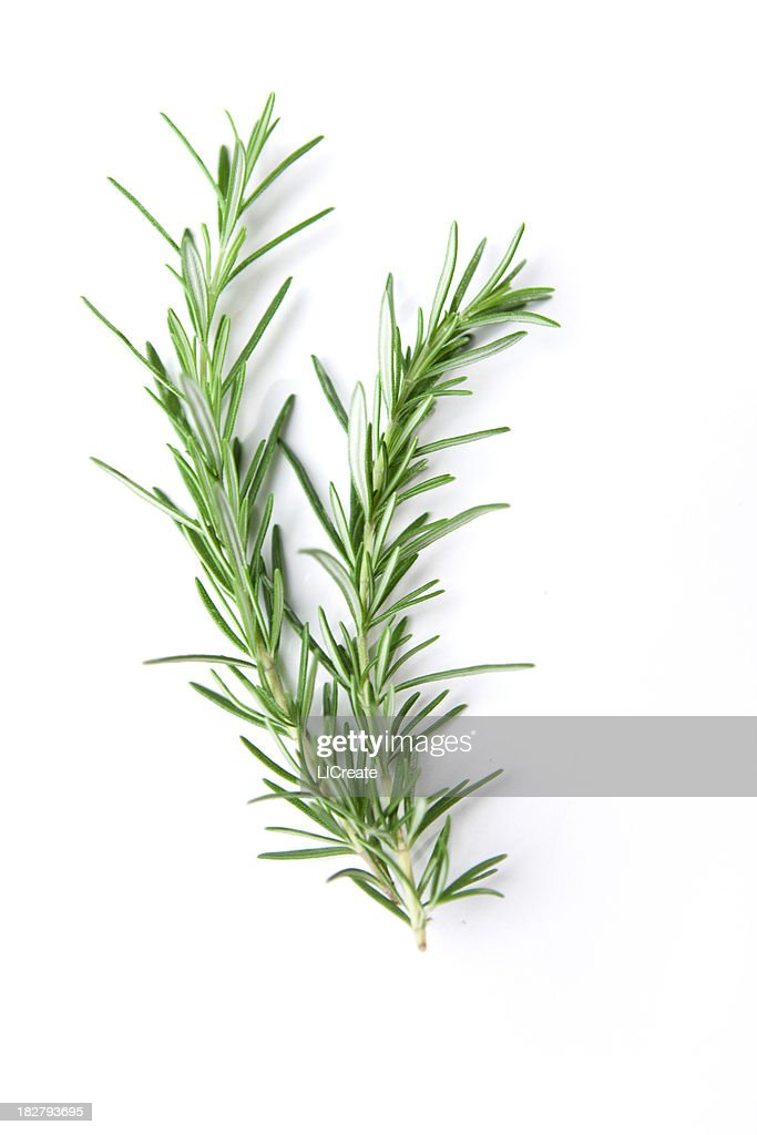 Sprig of Rosemary : Stock Photo