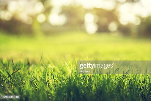 Spring and nature background concept : Stock Photo