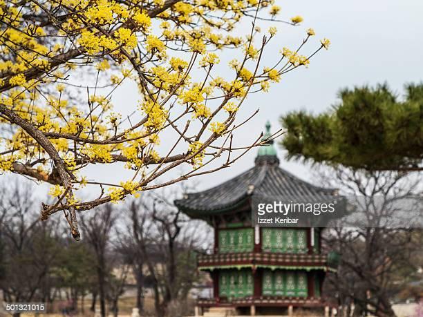 Spring at Geyongbokgung Palace,Seoul