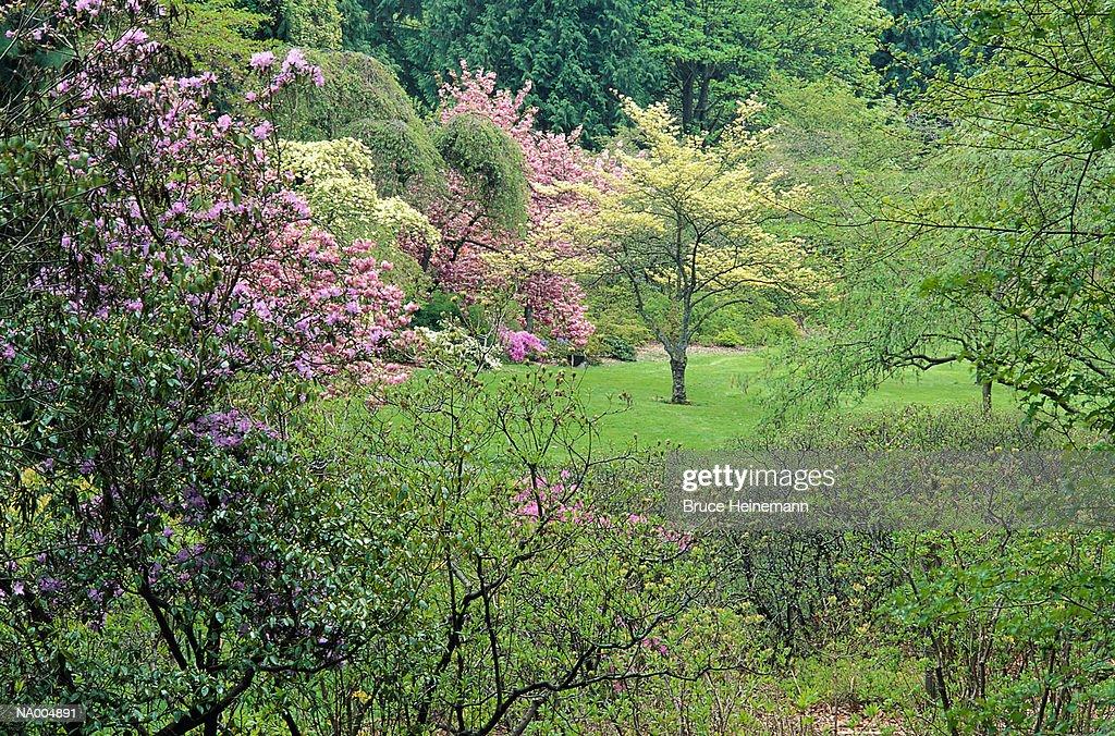 Spring at the Arboretum, Washington