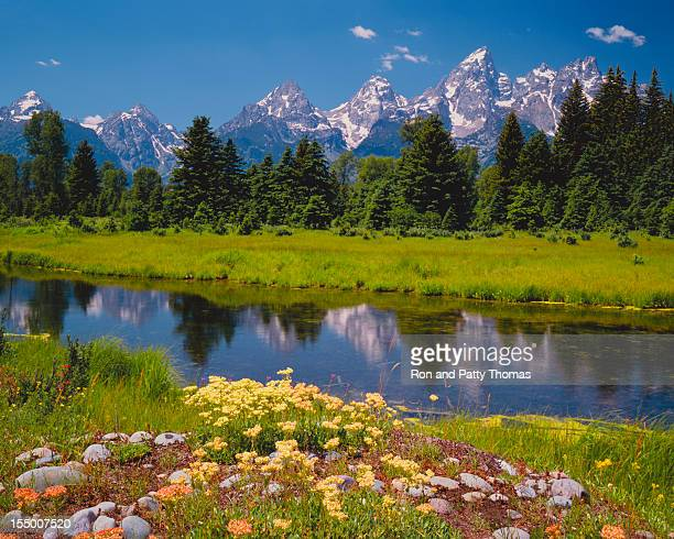 Spring at the Tetons (P)