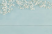 Simple spring background with baby's breath flowers