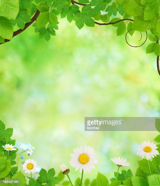 Spring Background With Leaves And Flowers