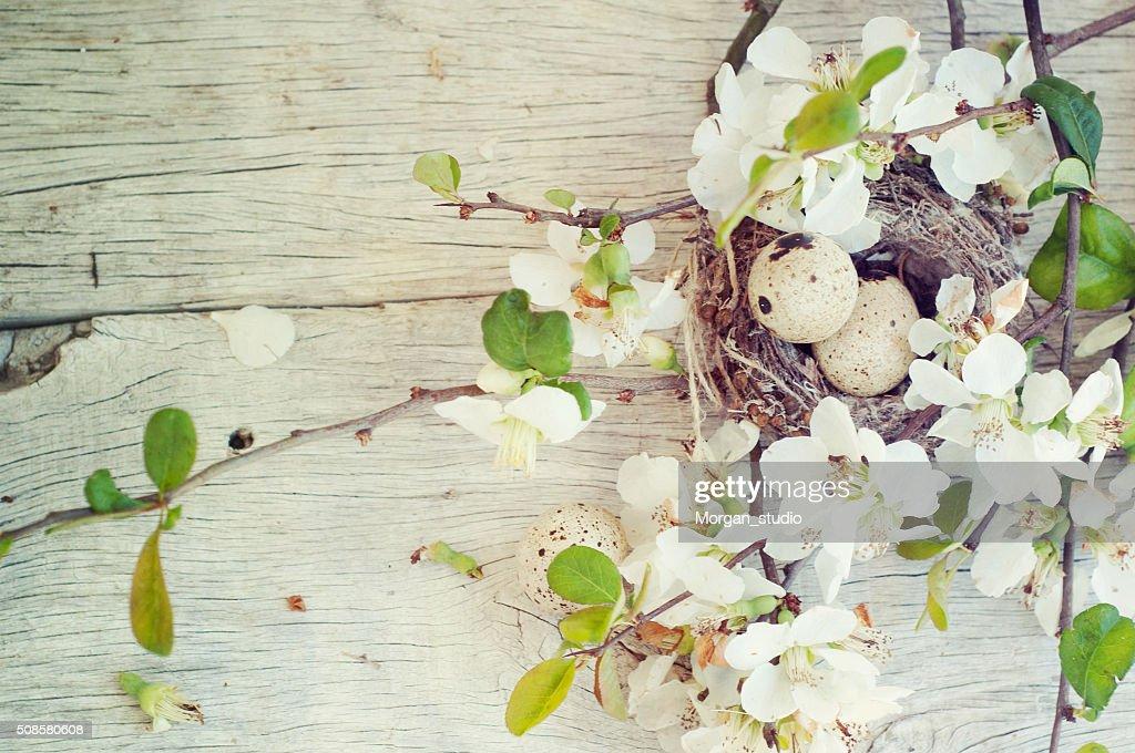 Spring blossom : Stock Photo