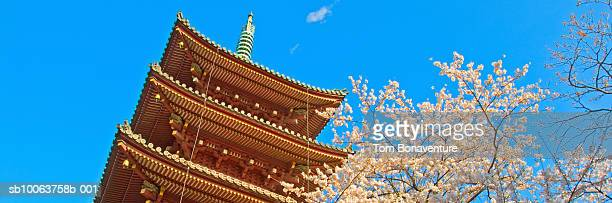 Spring cherry blossom next to Pagoda in Ueno park, low angle view