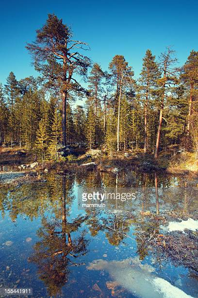 Frühling kommt in Finnland