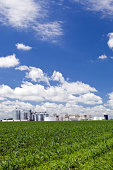 Spring Cornfield with Ethanol Biorefinery in the Background
