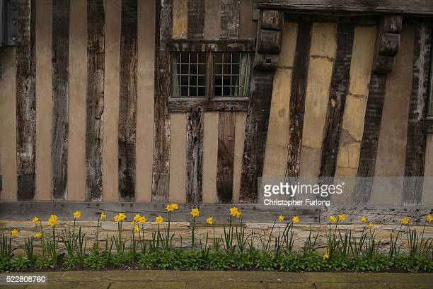 Spring daffodils bloom outside Hall's Croft the home of Shakespeare's daughter Susanna and her husband Dr John Hall on April 19 2016 in...