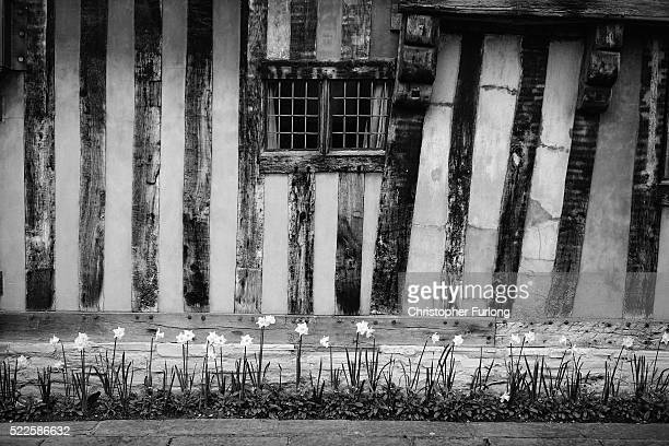 Spring daffodils bloom outside Hall's Croftthe home of Shakespeare's daughter Susanna and her husband Dr John Hall on April 19 2016 in...