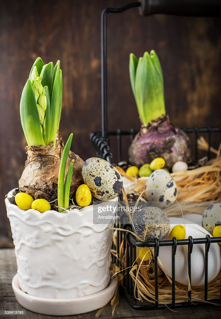 Decoração de primavera com Codorna ovos e Flor Jacinto : Foto de stock