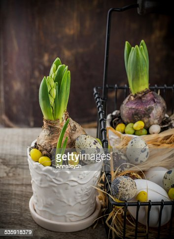 spring decoration with quail eggs and hyacinth flower : Stock Photo