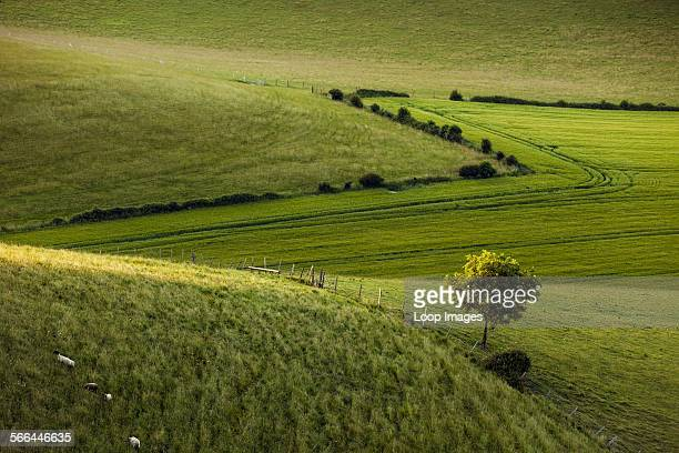 Spring evening in South Downs National Park
