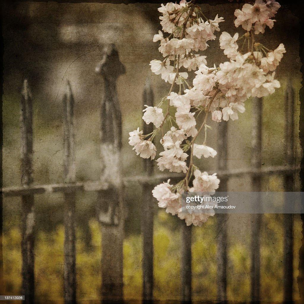 Spring fence : Stock Photo