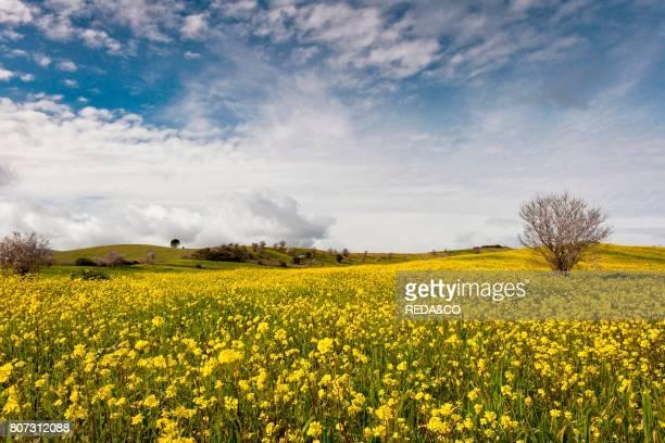 Spring fields Pau Alta Marmilla Sardinia Italy Europe