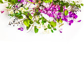 Multi-colored fresh flowers arranged gently to form a delightful background for any designs or presentations.