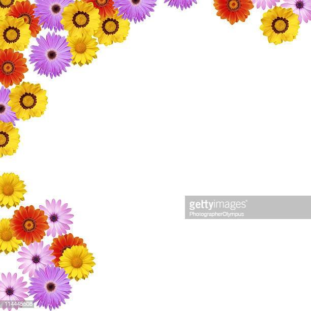 Spring flower border XXXL+