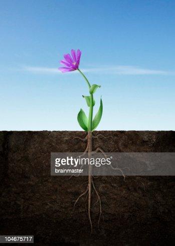 Spring flower grow