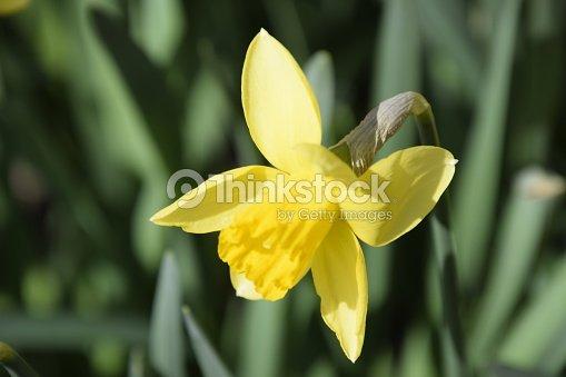 Plantes A Bulbe Fleurs Printemps Dans Le Parterre De Fleurs