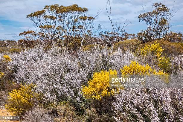 Spring flowering bush landscape