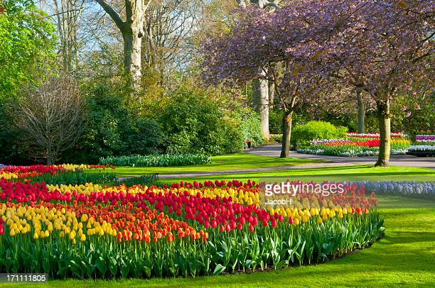 jardins de keukenhof photos et images de collection getty images. Black Bedroom Furniture Sets. Home Design Ideas