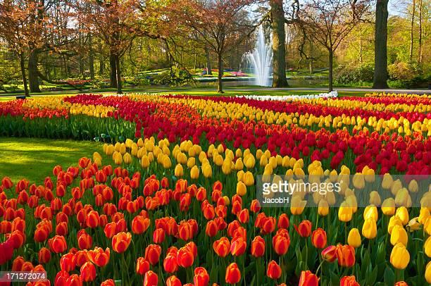 春の花の公園
