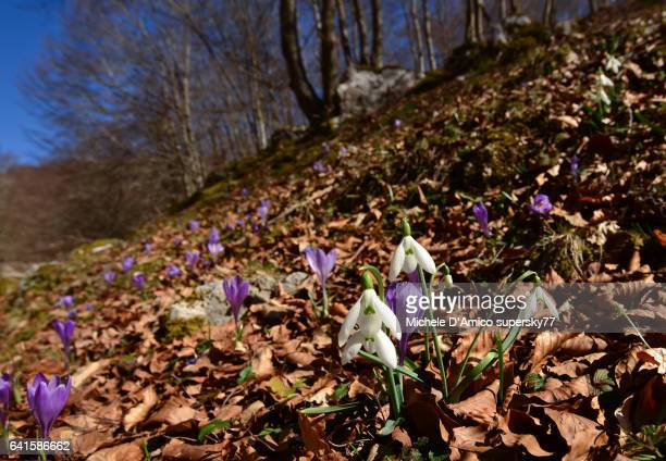 Spring flowers in the Appennines
