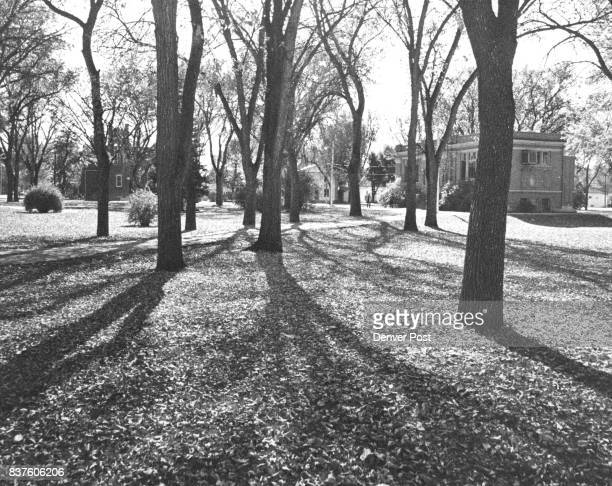 NOV 1 1963 NOV 6 1963 ***** Spring Flowers photo right a slow but inevitable transition is symbolized by the long shadows falling over a blanket of...