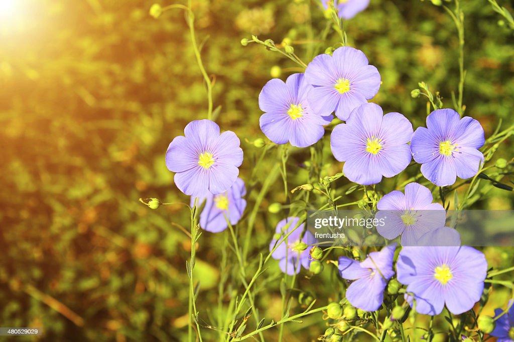 Frühling Blumen : Stock-Foto