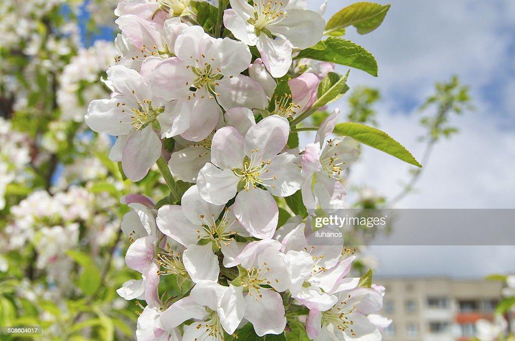 Flores de Primavera : Foto de stock