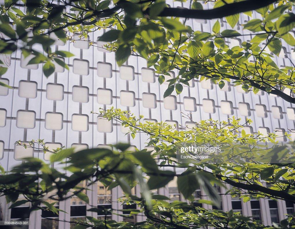 Spring foliage and office facade : Stock Photo