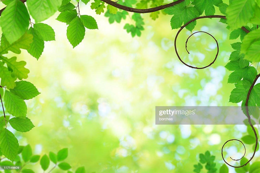 Spring Foliage : Stock Photo