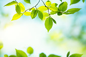 Spring background with fresh green leaves.