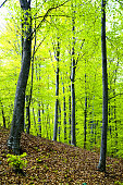 Trees in a lush green forest in spring
