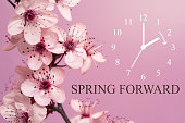 Spring Blossoms on Mauve Background / Daylight Saving Time Begins Concept