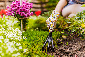 Woman hand planting a beautiful, green leaved plant on a natural, soil background, low angle view. Natural background for advertisements. Gardeners hands planting flowers with small rake in a garden d