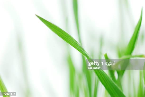 Spring Gras