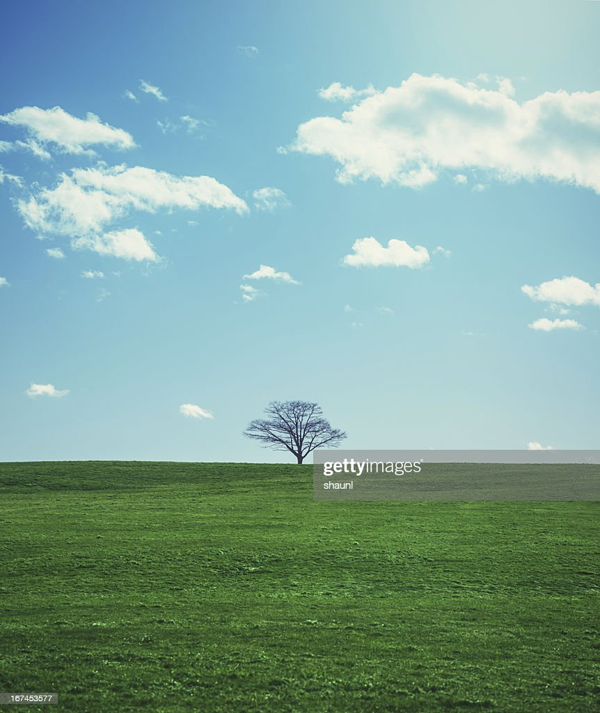 Spring Greens : Stock Photo