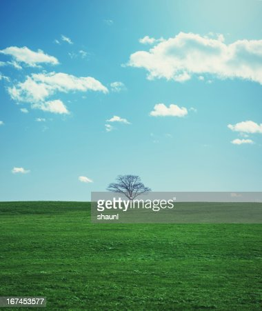 Spring Greens : Stock Photo
