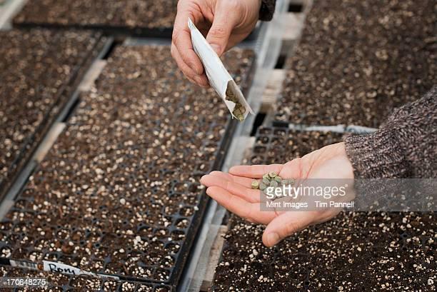 Printemps dans une croissance organique pépinière. Une personne