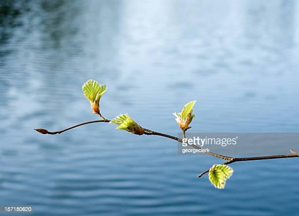 Spring Wachstum über Wasser