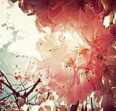 _ spring has sprung _