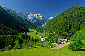 Alpine Logarska valley in Slovenia in the end of May