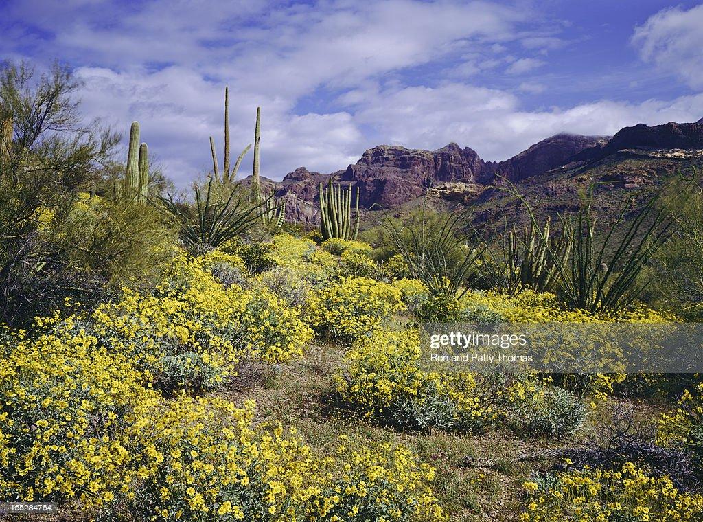 Spring in Arizona