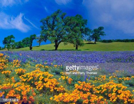 Spring In California