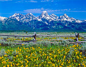 Spring in Grand Teton National Park