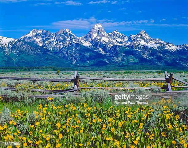 Spring in Grand Teton National Park