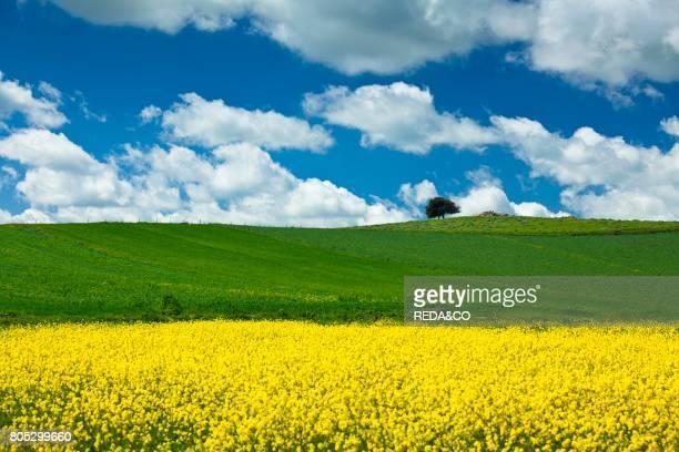 Spring in Marmilla San Simone village Escolca Medio Campidano CA Sardinia Italy Europe